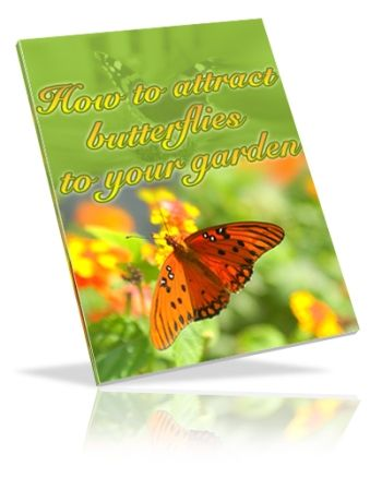 How to Attract Butterflies to Your Garden (PLR)